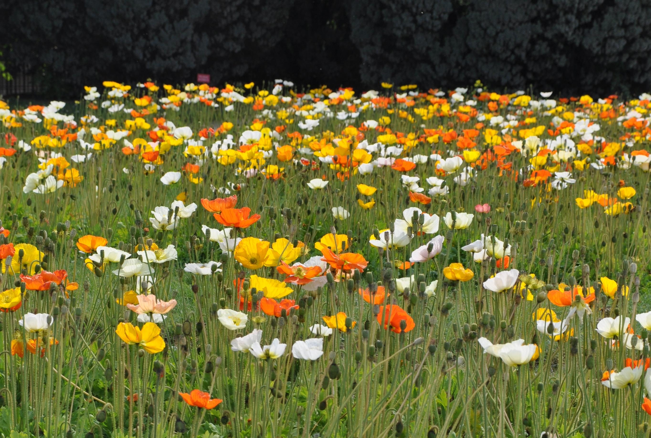 Jardin des plantes passage du temps for Plantes du jardin